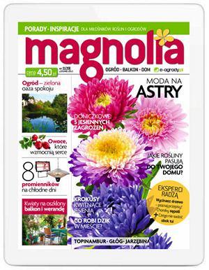Magazyn Magnolia