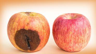 Wykroiłeś zepsuty kawałek jabłka, a resztę chcesz zjeść? Nie wolno tego robić. Dlaczego? [WYJAŚNIAMY]