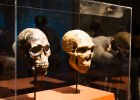 Wirtualne skamieliny. Jak naukowcy zrekonstruowali naszego przodka