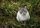 Jak polują polskie koty. Masakrują ptaki, ale szczurów się boją - wynika z nowych badań