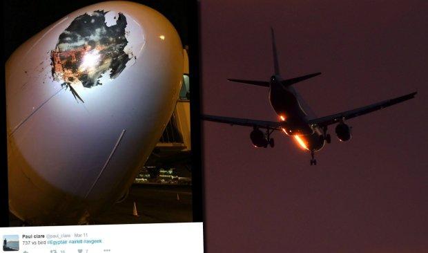 Boeing po zderzeniu z ptakiem