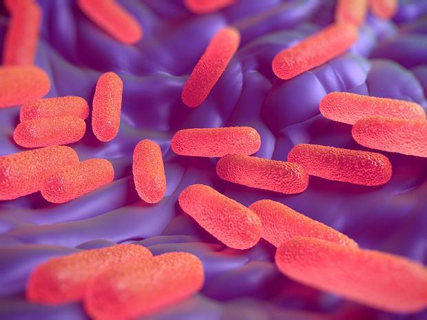 Salmonella - jak rozpoznać zakażenie salmonellą i jak wygląda leczenie?