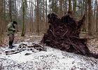 Puszcza Białowieska: Pierwotny puls padliny