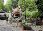 Wielkie wycinanie drzew w miastach. Dalsze losy drzew z wycinki