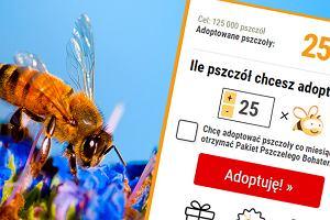 Udało się - 25 tysięcy. Dzięki Wam! Polacy znowu adoptowali pszczoły. I pobili rekord