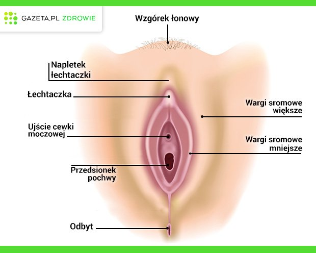 Układ płciowy żeński - narządy zewnętrzne (srom).