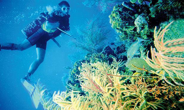 ameryka północna, podróże, wakacje, W krainie Majów: podróż do Belize, Gorgonie, gąbki, korale - szczęściarzem jest ten, kto mógł wejść do tego kolorowego świata.