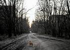 Czarnobyl: po latach na obszarze ska�onym bujnie rozwija si� przyroda