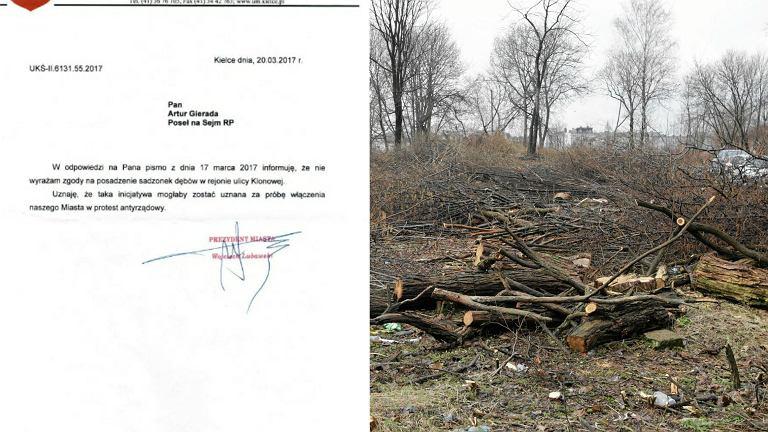 Odmowa prezydenta Kielc; wycinka drzew na Wzgorzu Karscha w Kielcach