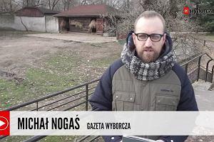 """""""Książka dnia"""" Michała Nogasia: Wielbłądzica baletnica i inne bajki"""