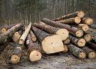 Drewno z Puszczy Białowieskiej traci międzynarodową wartość. Zagrożone ekologiczne certyfikaty