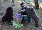 Zoo Poznań. Niedźwiedzica Cisna okalecza się z samotności. Recepta? Przywieźli jej psa [WIDEO]