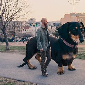 Pies gigant podbija Brooklyn -
