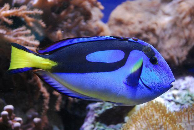 Nie kupuj Nemo, zostaw Dory w spokoju