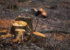 Ile drzew wycięto w Krakowie i innych małopolskich miastach