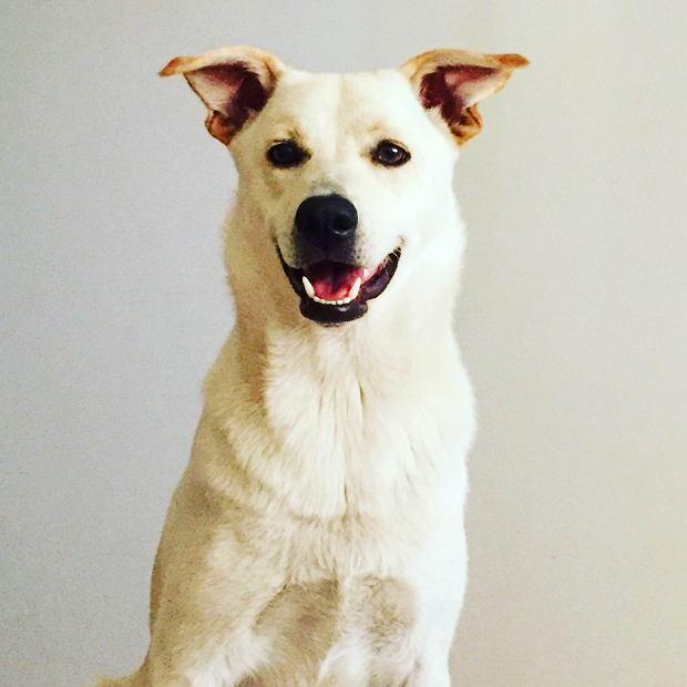 Szczęśliwy pies/fot. Anna Konieczyńska