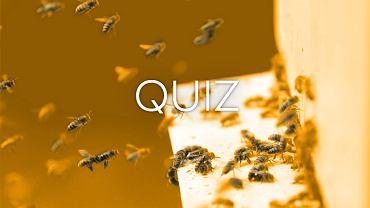 To 11 typowo polskich owad�w. Rozpoznasz na zdj�ciach, jak si� nazywaj�?