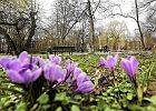 Dlaczego wiosna jest coraz krótsza?