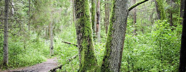 Minister środowiska odwołał dyrektora Białowieskiego Parku Narodowego