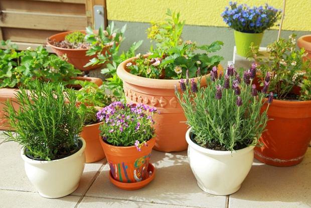 Przygotowanie donic do sadzenia ro�lin jednorocznych