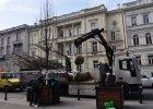 Nowe drzewa w Warszawie. Lipy wróciły w Aleje Ujazdowskie