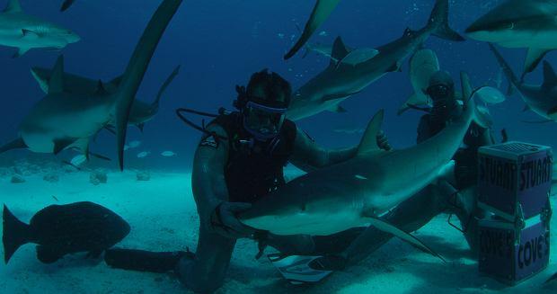 SW14 ZOMBIE SHARK