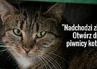 """""""Otwórz drzwi piwnicy kotom"""". Warszawa prosi mieszkańców o pomoc"""