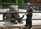 W krakowskim zoo znikną klatki z kratami. Zastąpią je szyby