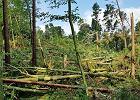 Trąba powietrzna przeszła przez Stare Jabłonki. Powalone zostało 13 hektarów lasu