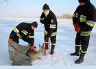 Niesamowita akcja: stra�acy uratowali trzynog� sarn� na Wi�le [FOTO]