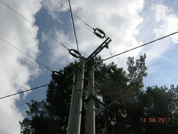 Bociany śmiertelnie porażone prądem. Ptaki giną tu od trzech lat [ZDJĘCIA]