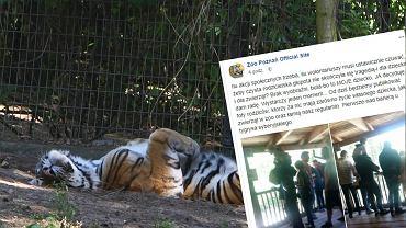 Poznańskie zoo ostrzega przed nieodpowiedzialnym zachowaniem rodziców