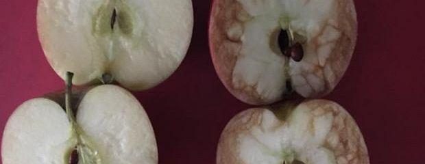To nie są zwykłe jabłka. One uczą tolerancji