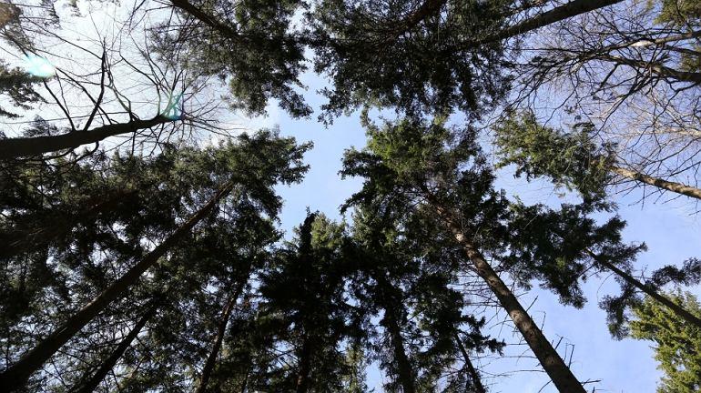 12 typowo polskich drzew. Ile poznasz po zdj�ciu? Sprawd� si�! [QUIZ]