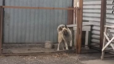 Pies i Modern Talking