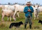"""Tu praca pasterzy nie zmieniła się przez setki lat. """"To symbol kraju"""" [ZDJĘCIA]"""