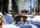 Zimą w ZOO wcale nie jest nudno! Małpy kichają, a foki jedzą na potęgę