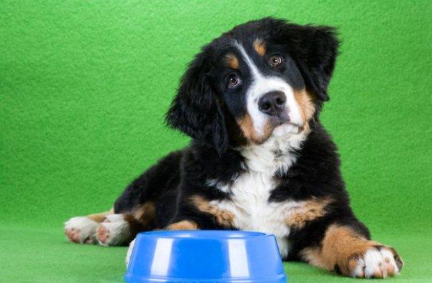 Dieta zwierząt domowych - czego nie powinien jeść twój pies?