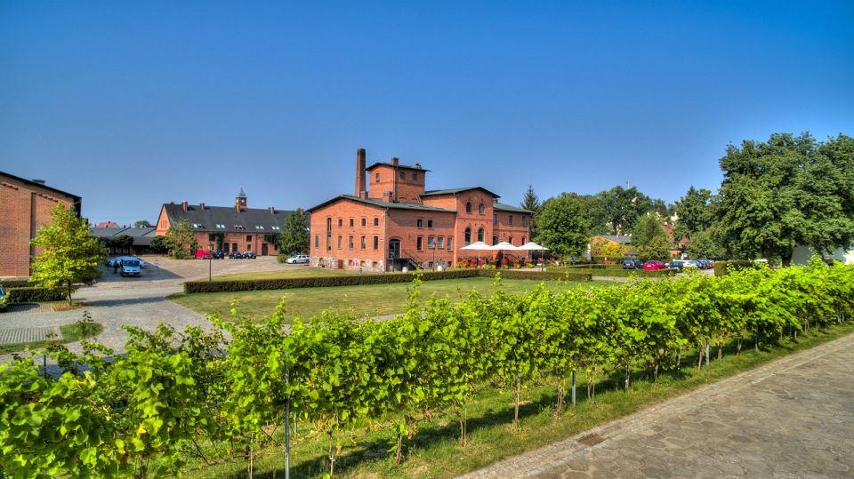 Zdjęcie numer 3 w galerii - Dobre polskie wina naprawdę istnieją, choć budzą kontrowersje. Głównie ze względu na cenę