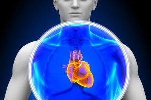 Serce: doskona�a pompa, zaprogramowana na ponad 100 lat. Jak pracuje i po co?