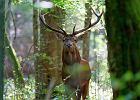Wyjątkowo wczesne jelenie