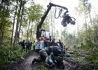 Puszcza Białowieska. Aktywiści wciąż przykuci do drzew. Protest trwa
