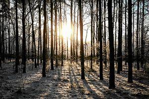 Pogoda na styczeń. Co przyniesie nadchodząca zima? Będzie ciepło, ale spadnie też śnieg
