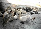 Zwierz w wielkim mieście: Jak ptaki radzą sobie zimą w Warszawie?