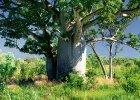 Drzewa matematyczne, czyli dendrologia stosowana