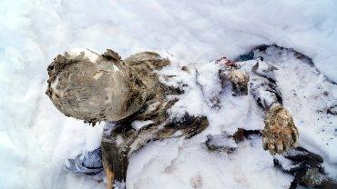 Na najwy�szej g�rze Meksyku znale�li zmumifikowane zw�oki i szkielet. To zaginieni wspinacze?