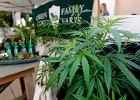 Konopna rewolucja w Kalifornii. Najbogatszy stan USA od 1 stycznia legalizuje uprawę i sprzedaż marihuany