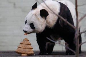 Policja organizuje zbiorowy �lub, panda pa�aszuje �wi�teczny prezent [ZDJ�CIA TYGODNIA]