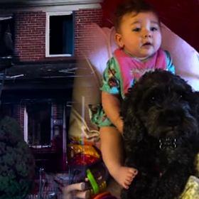 Ten pies uratowa� ma�� dziewczynk� z po�aru. Zap�aci� za to najwy�sz� cen� [WIDEO]