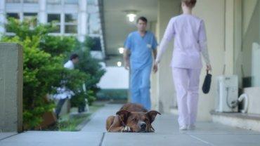 To nie jest zwyk�y film o psie, kt�ry czeka pod szpitalem na swojego pana